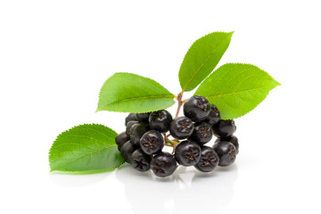Bunch of ripe black chokeberry on a white background