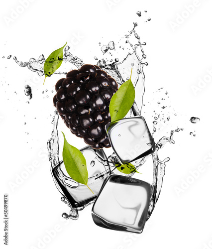 Poster In het ijs Blackberry with ice cubes, isolated on white background