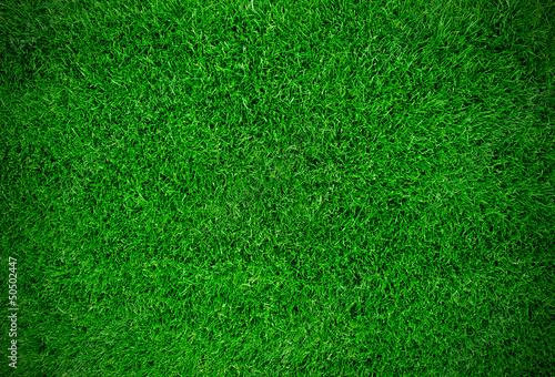 Grass field - 50502447