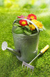 Rustic metal watering can with flowers