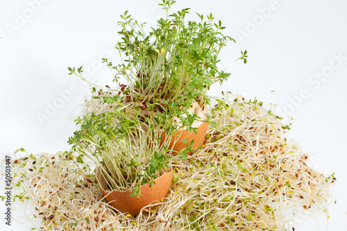 ...Fresh Alfalfa Sprouts and Spring Easter Egg