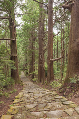 Tree Forest and Stone Trail in Kumano Pilgrimage. Japan, Asia.