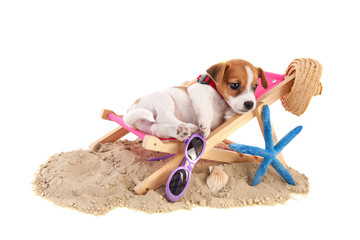 Beach puppy