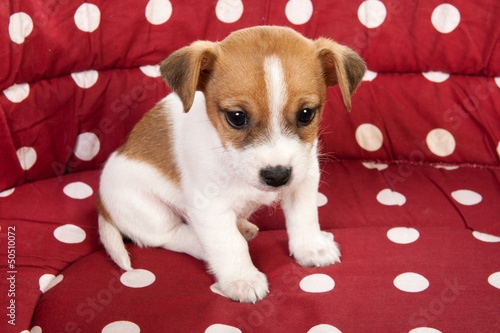 Red spotted pet bed with little puppy