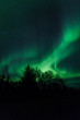 Northern lights above trees in Iceland
