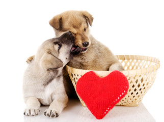 Valentine puppies iwith a heart. isolated on white