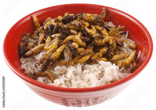 bol de riz et larves de guêpes frites