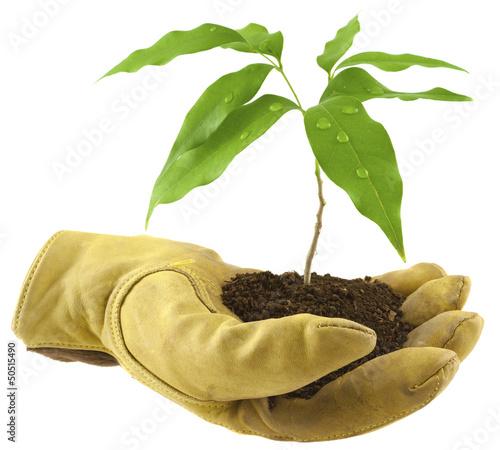 concept environnement, écologie, reboisement