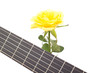 Beautiful rose with guitar