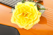 Beautiful rose on guitar