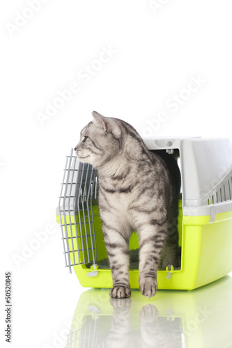 canvas print picture Katzentransport