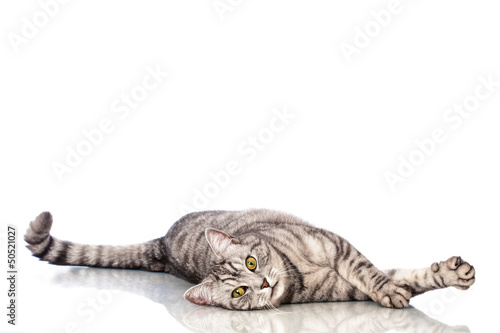 canvas print picture Liegende Katze - Lying cat