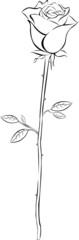 Rose Outlines Vektor