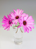 Bouquet of flowers osteospermum in a vase on a gray background.