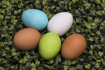 Colorful Easter Eggs in the fresh spring meadow