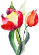 Quadro Tulips flowers