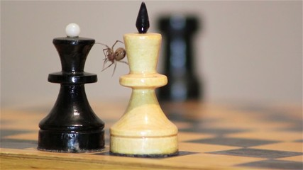 chess game, chess spider