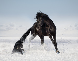 The horse and the dog