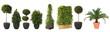 Leinwanddruck Bild - Dekopflanzen Set im XXL-Format