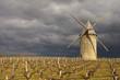 Le moulin de courrian à Blaignan dans le médoc. Gironde