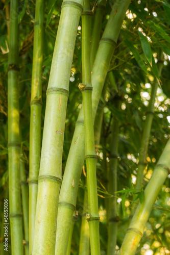 Fototapeten,bambus,grün,hein,wald