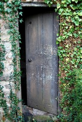 Old open wooden door overgrown with ivy
