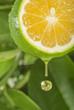 Vitamin C Drop