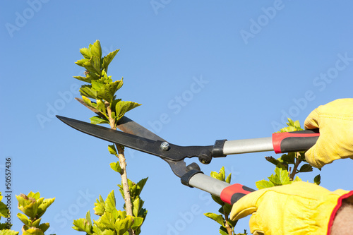 Garden work pruning tree sky background
