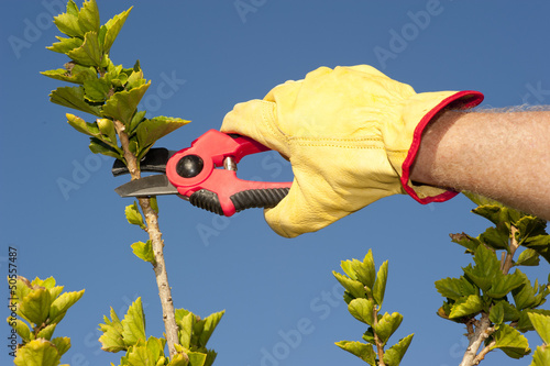Garden work pruning hedge sky background