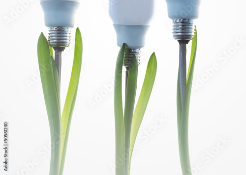 Economic light bulbs growing out of three green plants