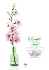 Spring decoration, Almond branch in a bottle