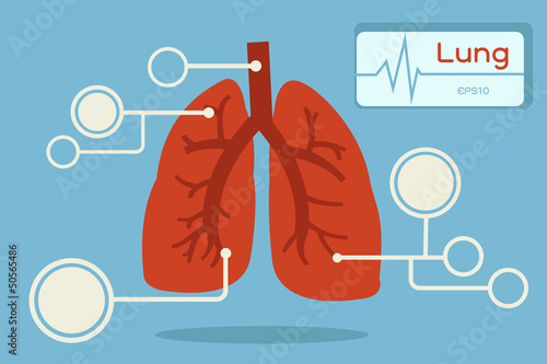 lung infographic, vector