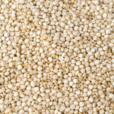 Quinoa seed closeup background