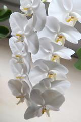 orkide12
