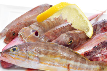 raw fishes from the mediterranean sea