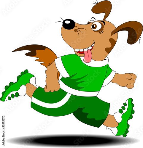 dog marathon