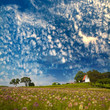 canvas print picture - green field and blue sky
