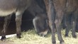 Esel im Stall