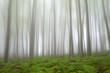 Obrazy na płótnie, fototapety, zdjęcia, fotoobrazy drukowane : Mystic forest with fern