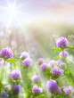 Art spring natural background, wild clover flowers