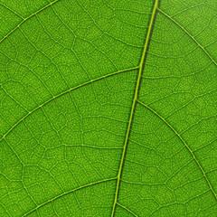 fond végétal de nervures de feuilles