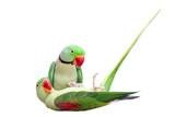 Pair of big green ringed or Alexandrine parakeet