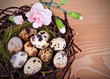 Quail's Eggs and Flowers in a Easter Nest