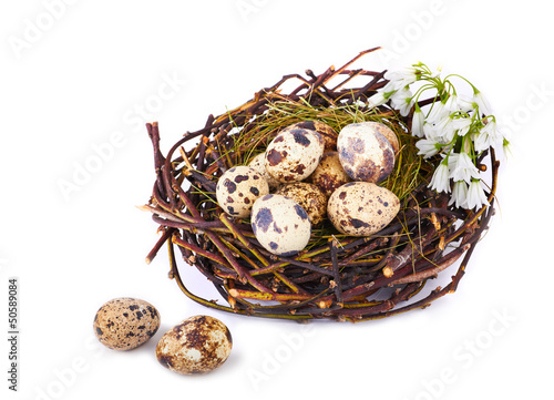 Quails Eggs  in a nest isolated