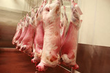 Lamb carcasses in an abattoir
