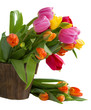 blooming  tulips