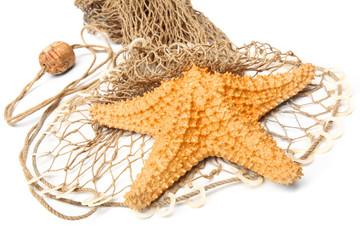 The Caribbean Starfish (Oreaster reticulatus) on a fishing net.