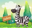A zebra beside a signboard