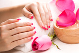 female hands with rose petals and towel. Spa