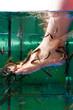 Kangalfische knabbern Hornhaut am Fuß